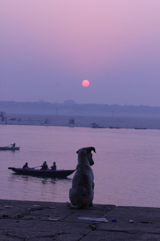 Photo credit: Nirav Shah