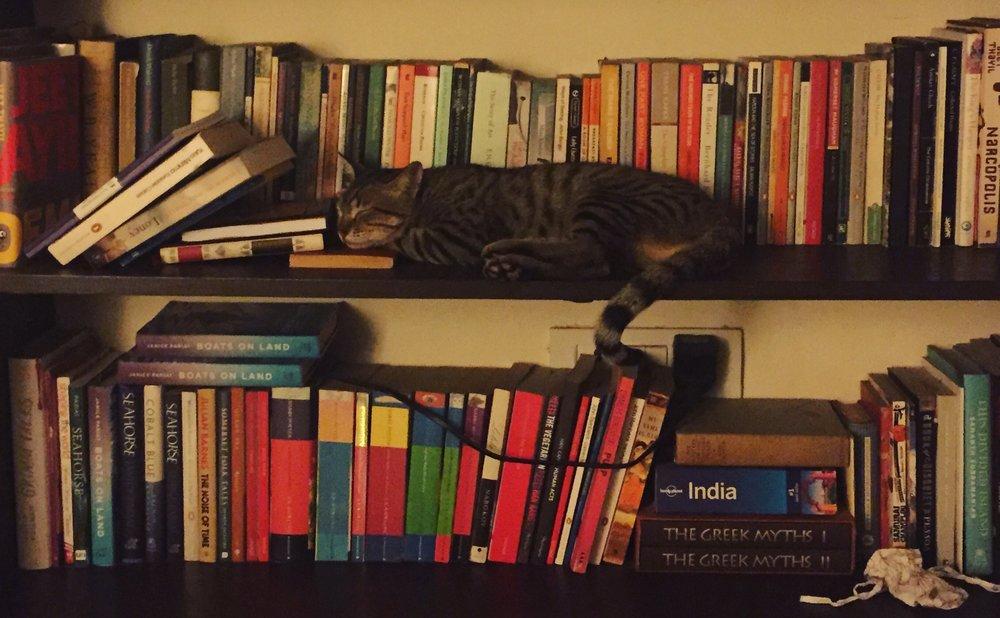 Janice's cat has a few favourites on the bookshelf.