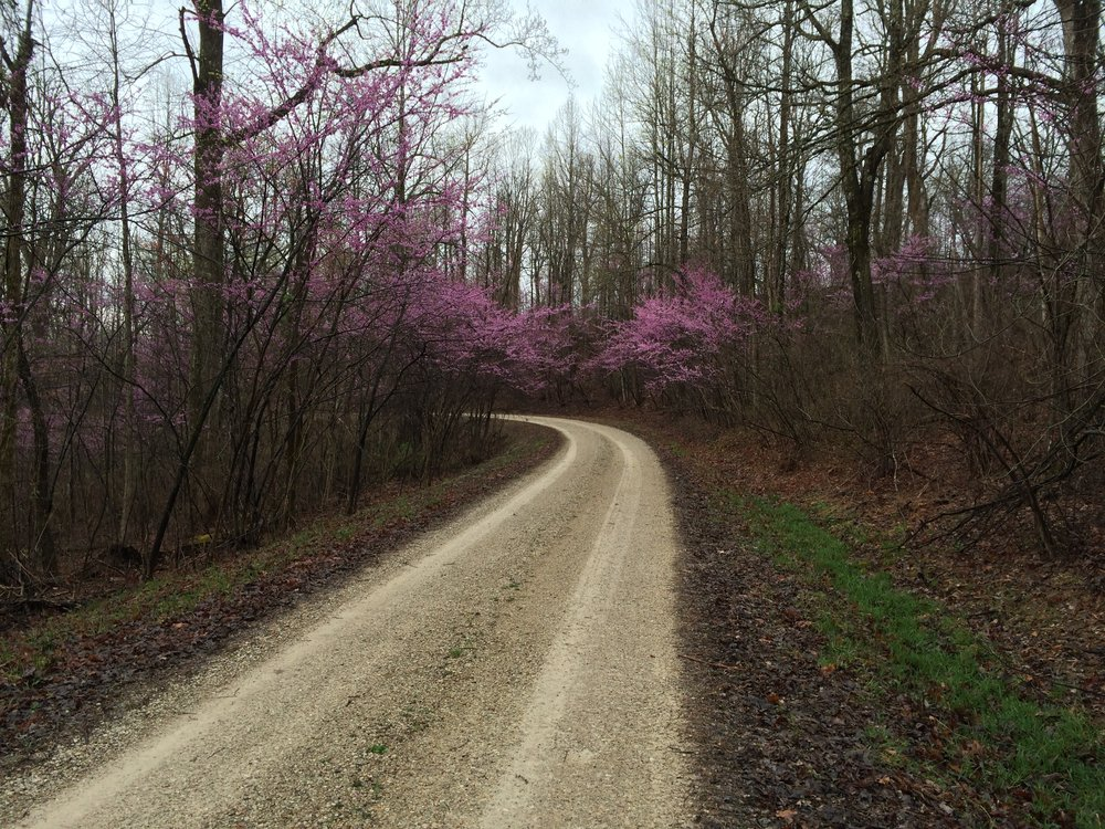 The purple flowers bring life to the gravel road.