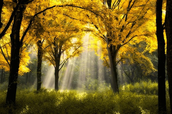 Image credit: Sun Forest, Lars Ven de Goor
