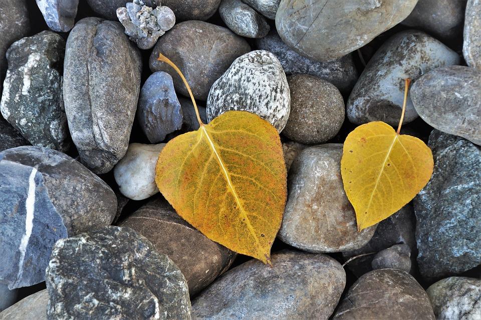foliage-3709736_960_720.jpg