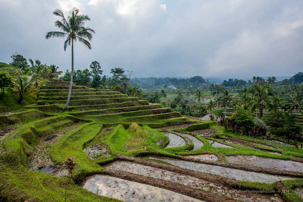 Unesco Jatiluwih Rice Fields