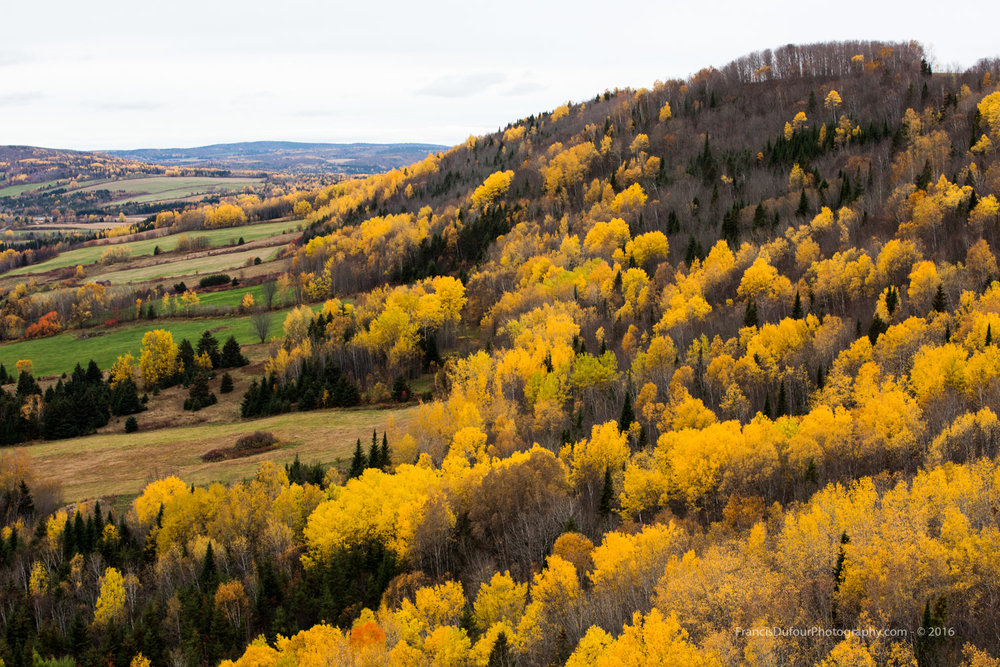 Vallée dorée