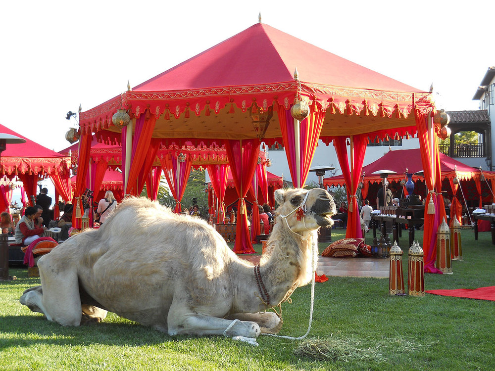 raj-tents-grand-pavilion-moroccan-with-camel.jpg