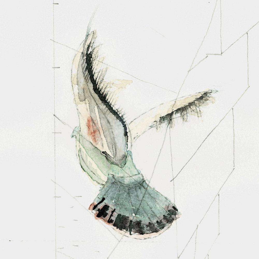 Pigeons_1a_Crop1_W1500px_72dpi_Qual1.jpg