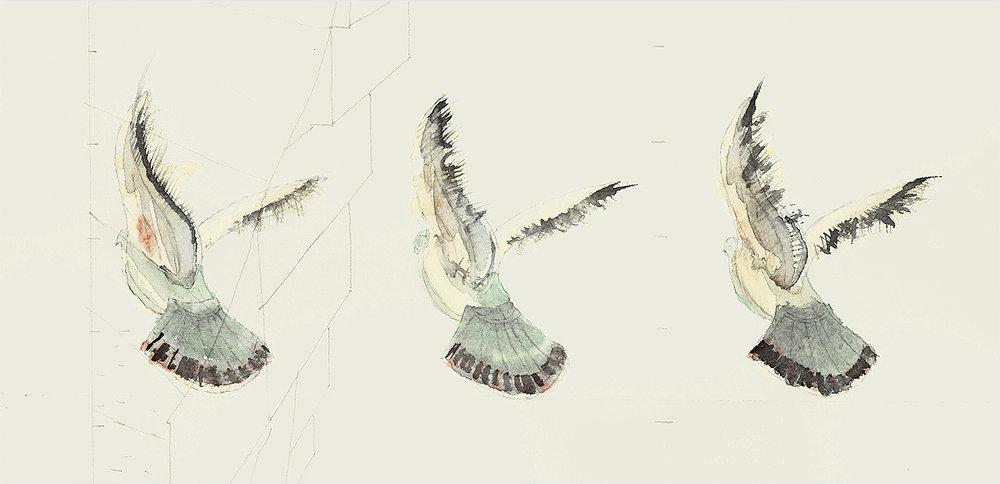 Pigeons_1a1_W1500xp_72dpi_Composite_Gallery.jpg