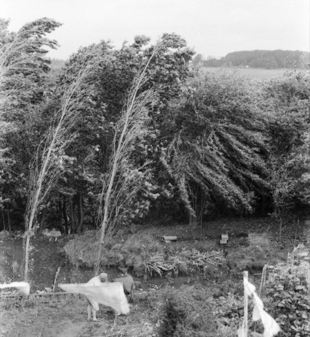 Tree piece.Somerset.1974