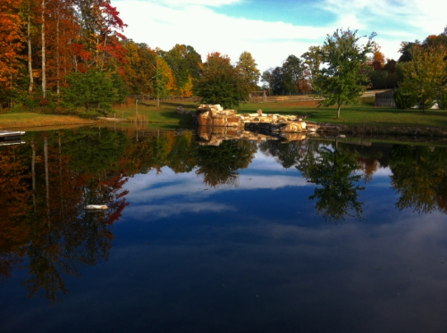pond-500 wide.jpg