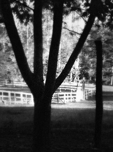tree-fence.jpg