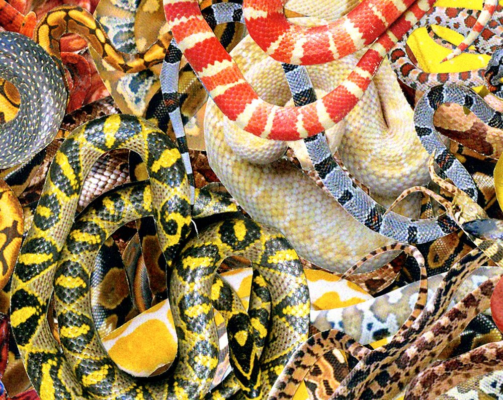 Web_Hearts_(Snakes)_D.jpg