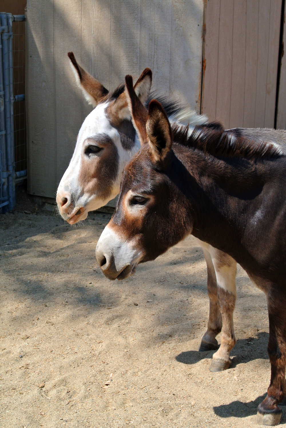 Donkeys cropped.jpg