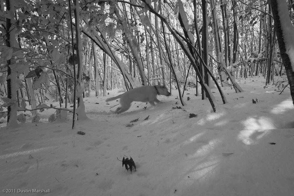 october_snow-2.jpg