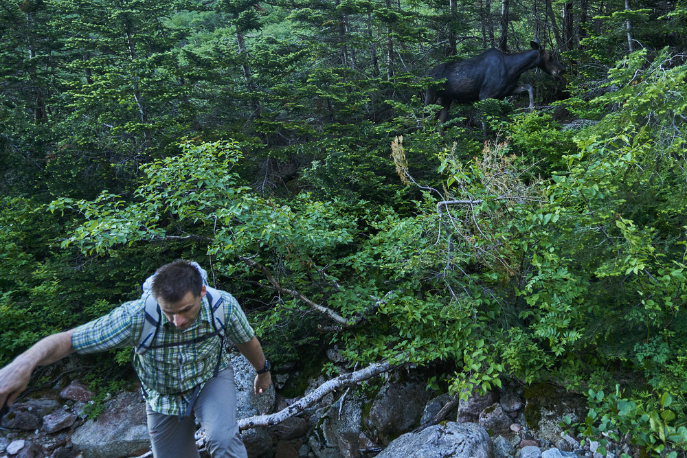 "I wouldn't say Keith was ""scared"" of the moose we encountered near Chimney Pond both days of our climbing. But he was definitely concerned about being right next to a wild animal weighing several hundred pounds."