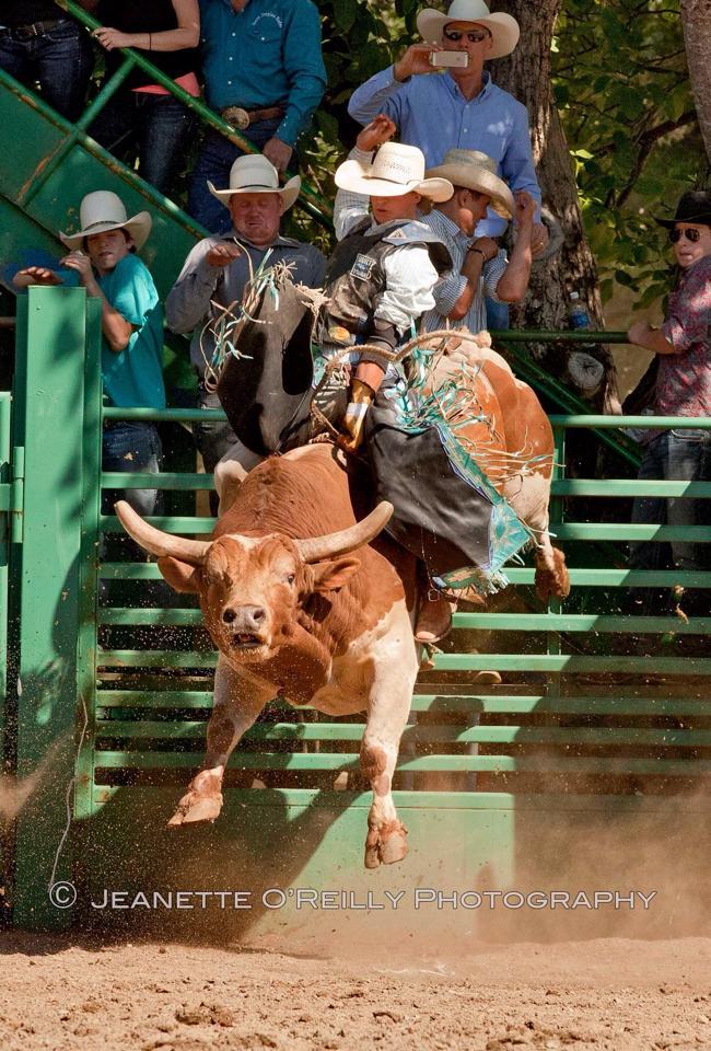 bull4.jpg