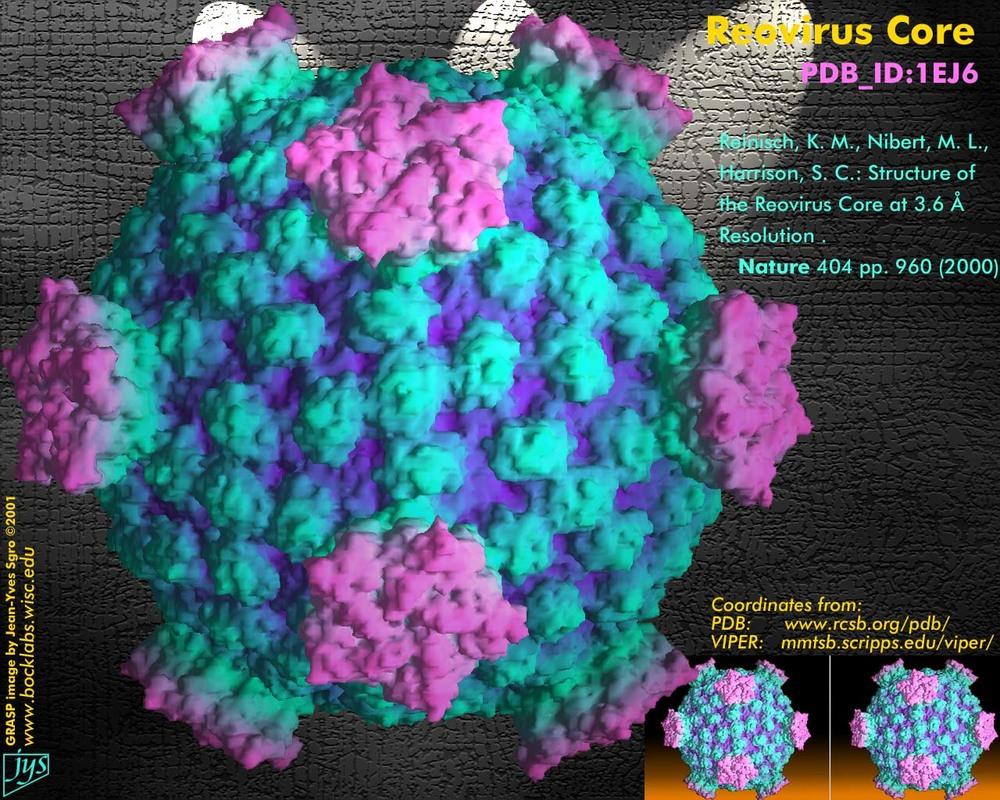 reovirus_asv2001.jpg