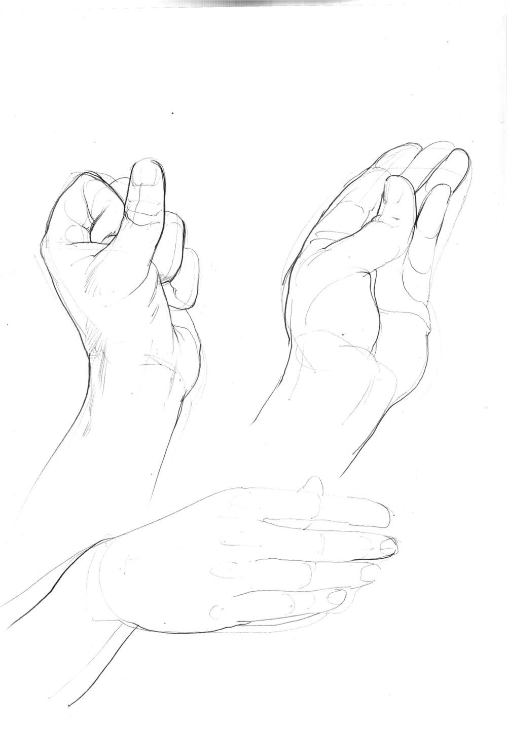 hand studies 3.jpeg