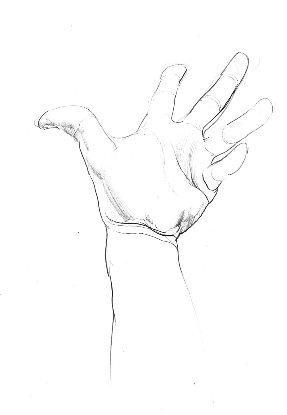 hand studies 1.jpeg