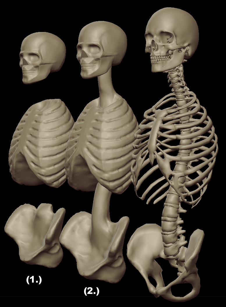 torso masses 1.png