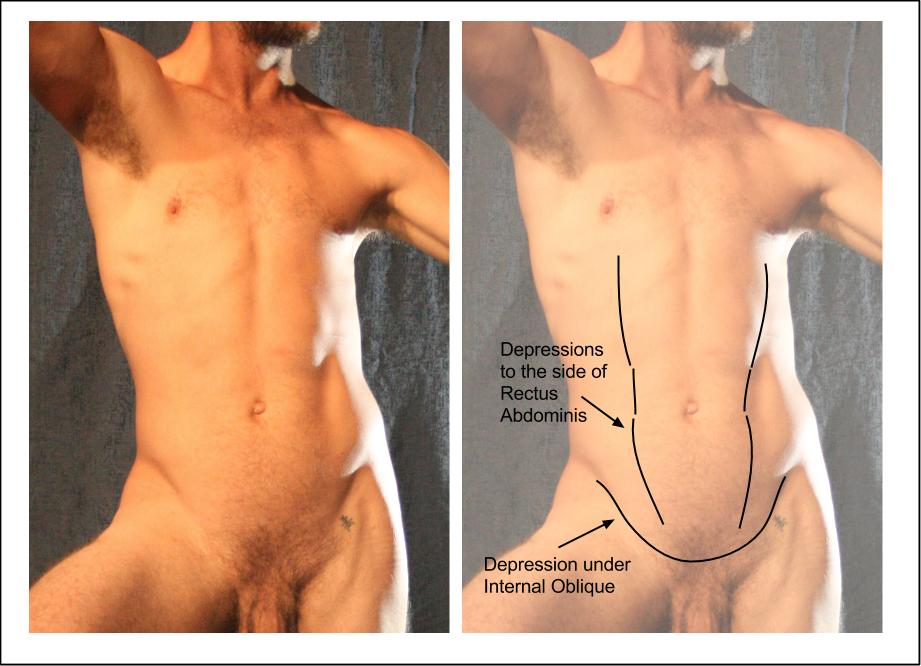 Internal Oblique.jpg