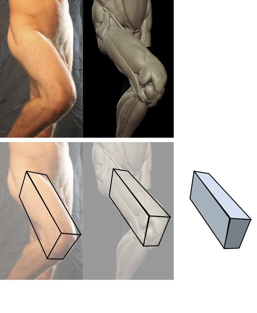 Block of the thigh.jpg