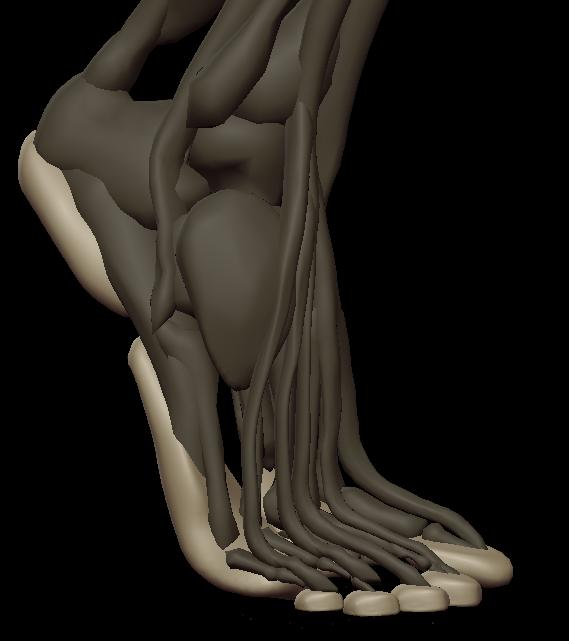 a footpads 4.png