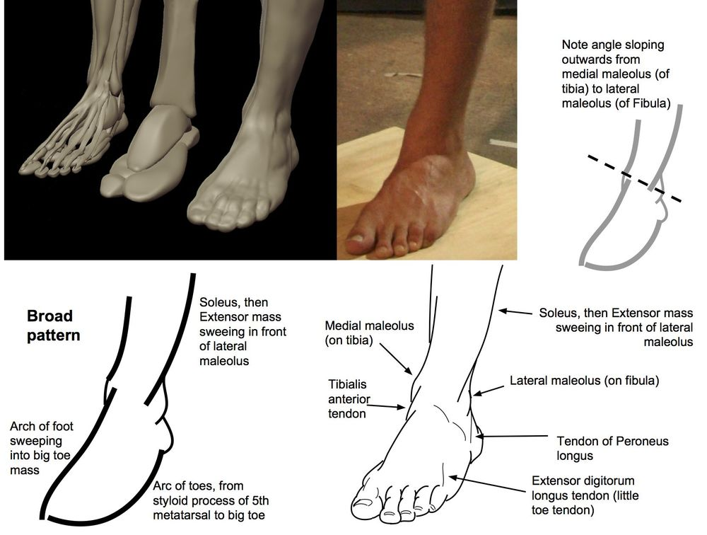 List of Synonyms and Antonyms of the Word: lateral big toe