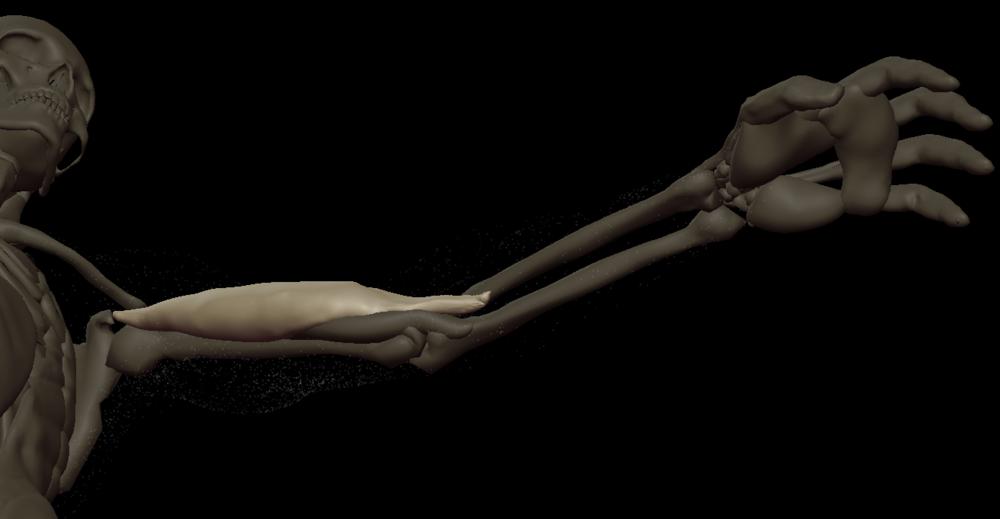 t biceps 1.png