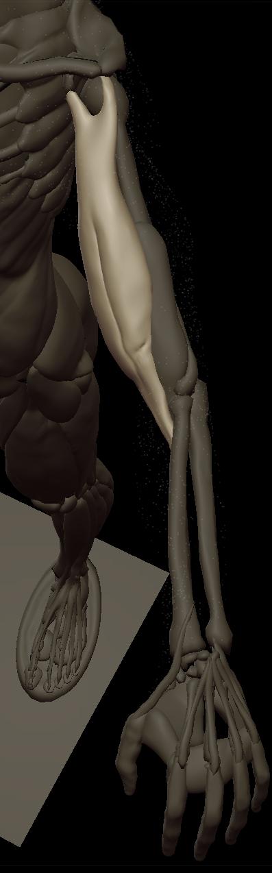 t biceps 2.png