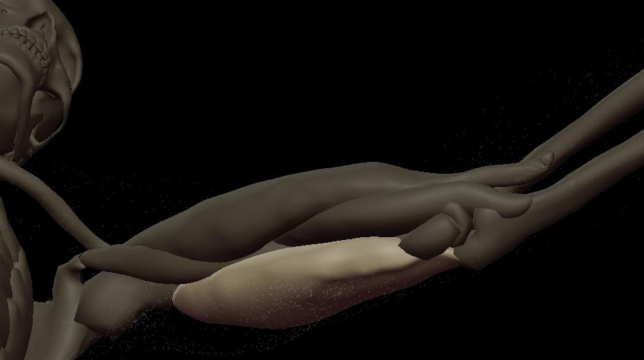 u triceps medial 3.png