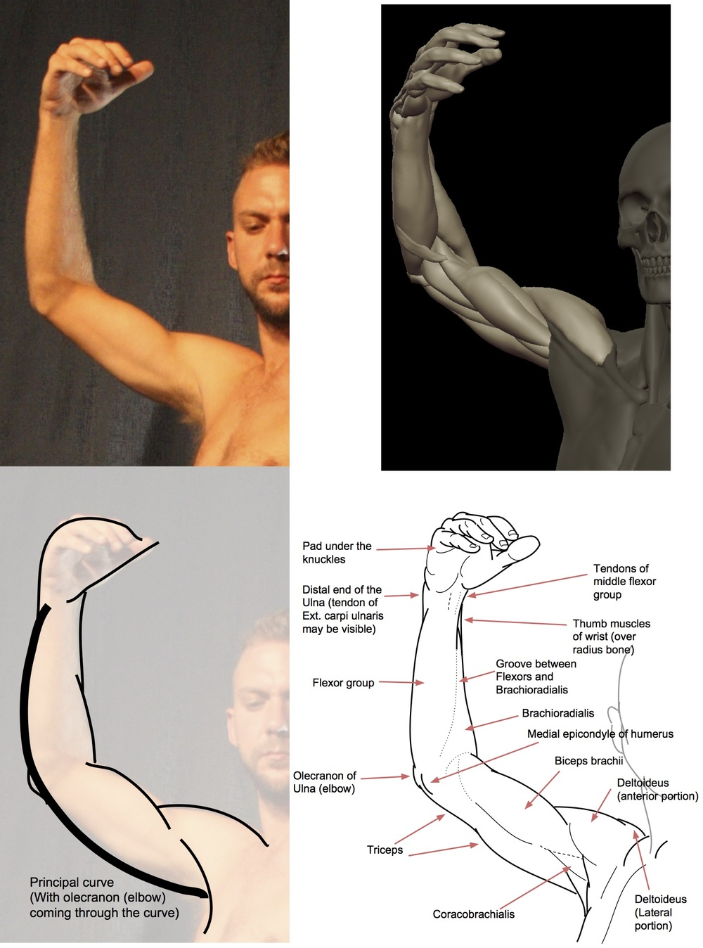 Inside bent arm (1).jpg