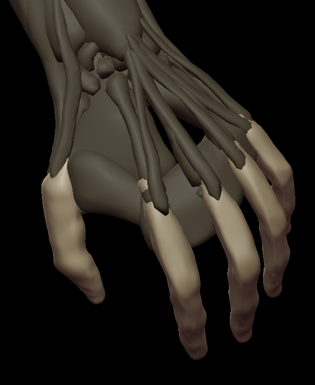 H fingers 2.png