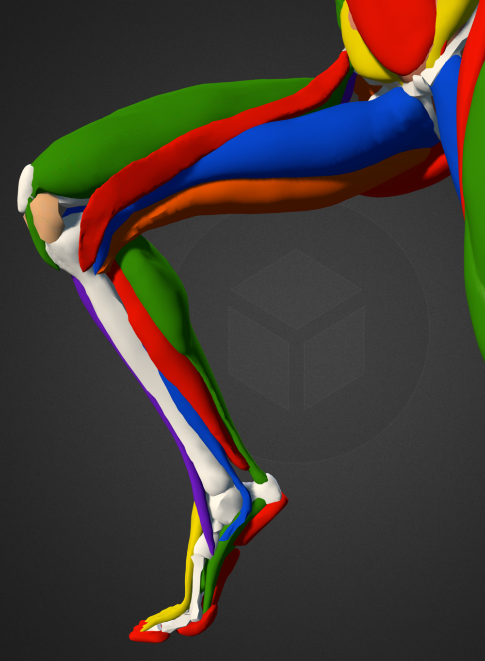 right leg colour inside.png
