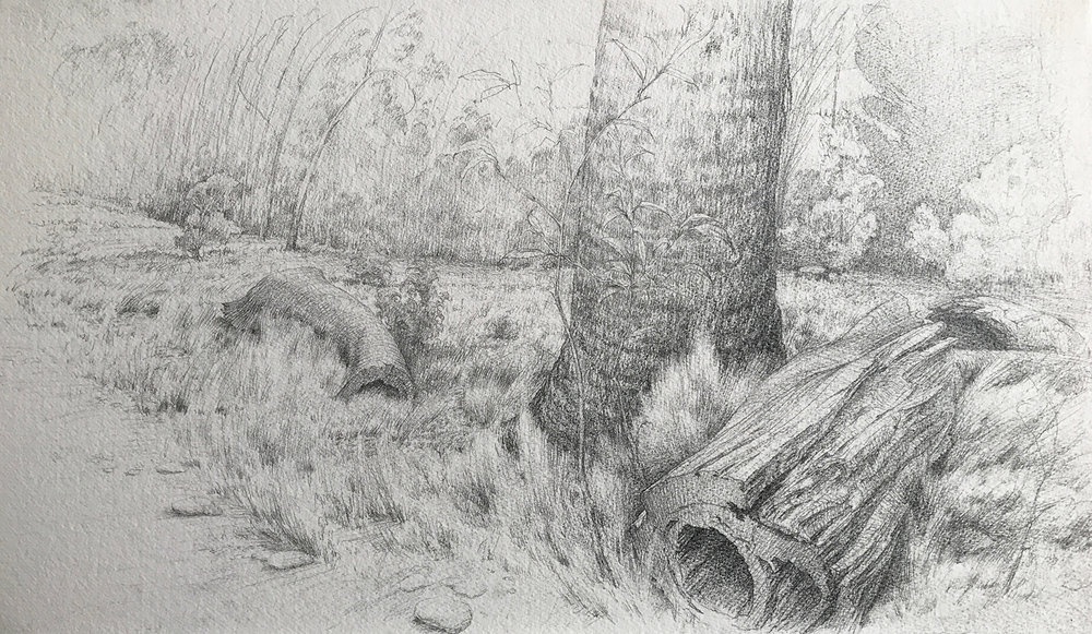 Study for Fallen Timber