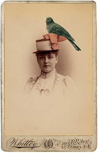 Bird-on-a-Hat_Whitley.jpg
