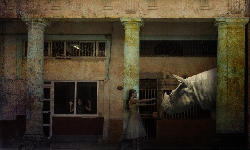 _DSC0741_rhino.jpg