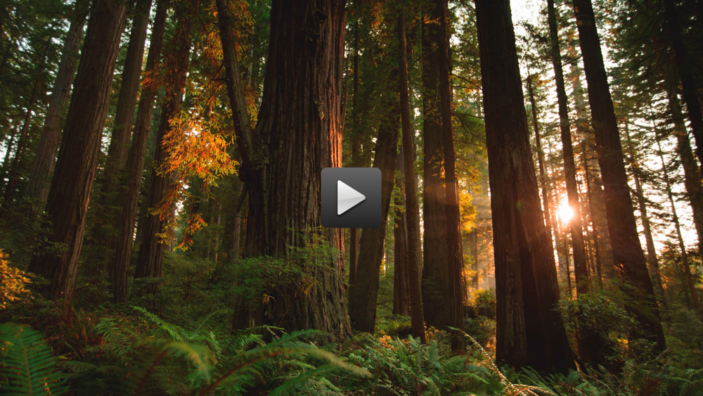 Redwood, More Than Just Parks'