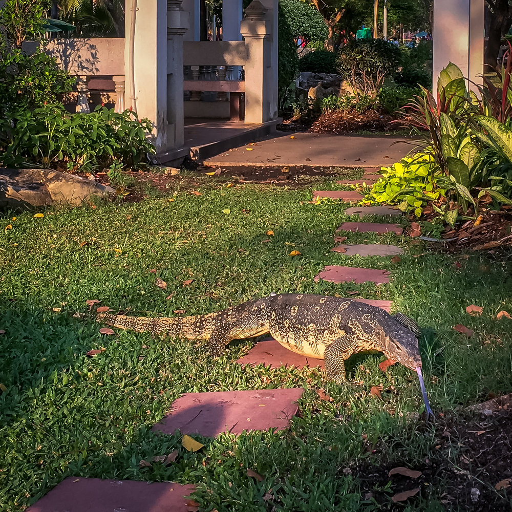 Monitor Lizard in Lumphini Park