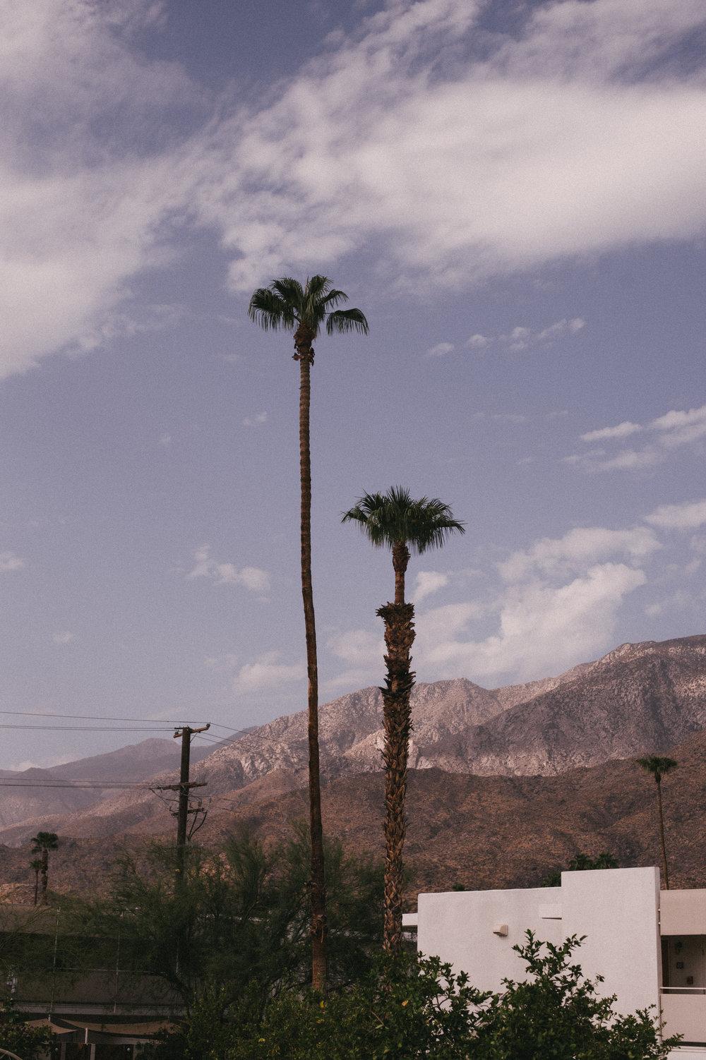 The-Glossier-Ace-Hotel-Palm-Springs-CA-40.jpg