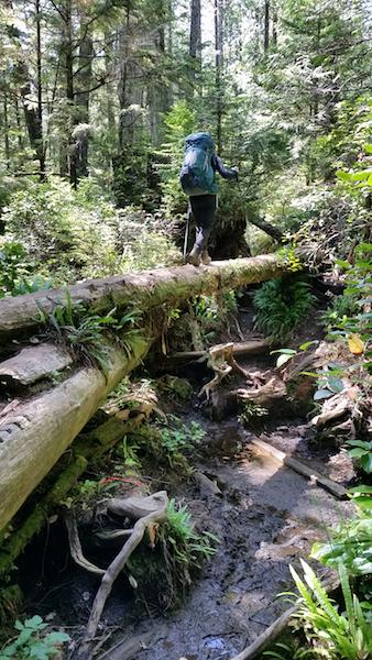 Log bridges for the win