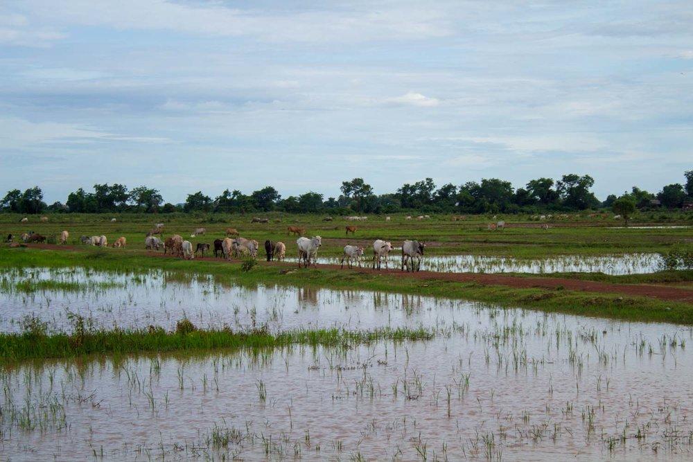 Cambodia - Kampong Chhnang--2018-12.jpg