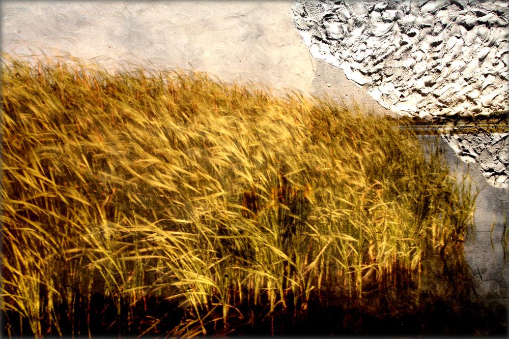 08_VictorVilamajo_Natures.jpg