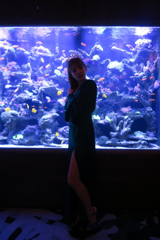 sexy_fish_aquarium