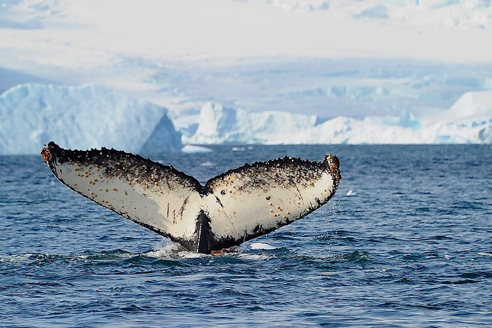 NORTHERN BAFFIN BAY AND THE NORTH WATER POLYNYA -