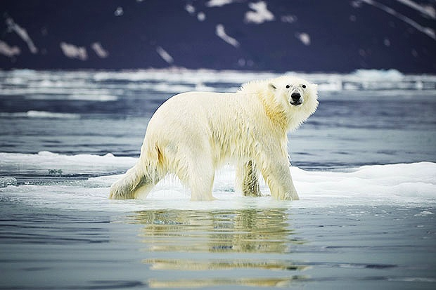 HIGH ARCTIC ARCHIPELAGOS -