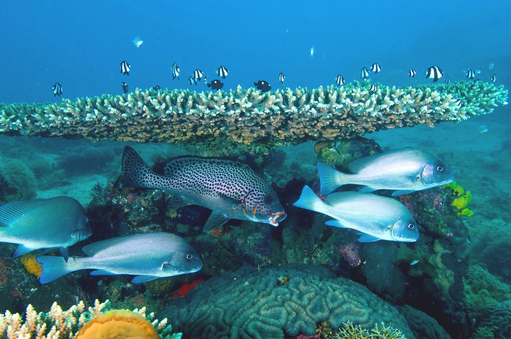 NORTHERN MOZAMBIQUE CHANNEL -