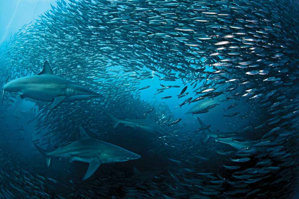 SOUTH  AFRICA MPA  NETWORK -