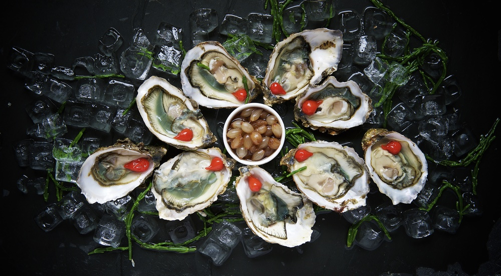 Can Oysters Suffer?