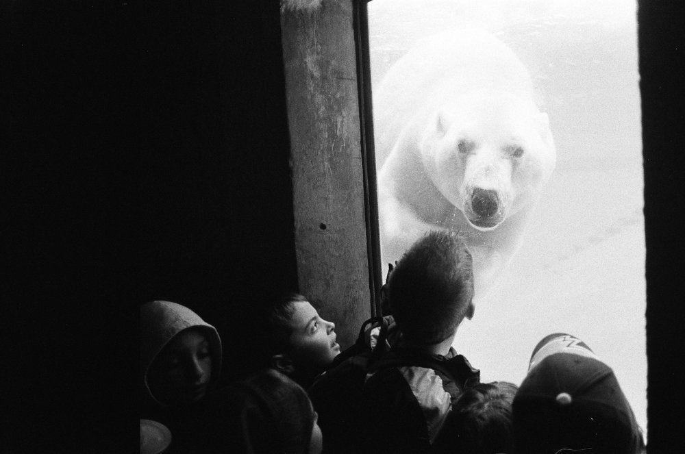 Polar-Bear-in-Canadian-Zoo