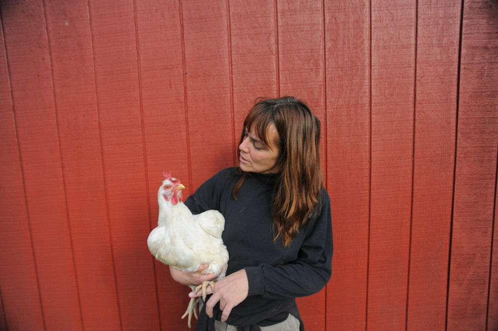 Susie-and-Lucille-Farm-Sanctuary