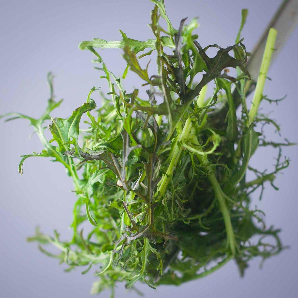 Square Roots Mustard Greens.jpg